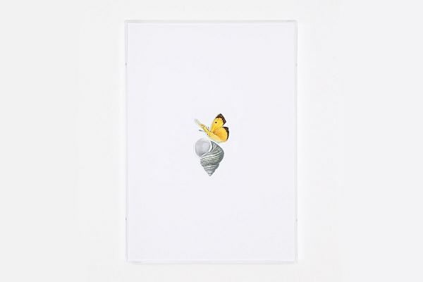 Angelo Formica, Senza titolo, collage su forex in teca, 2014, Galleria Toselli